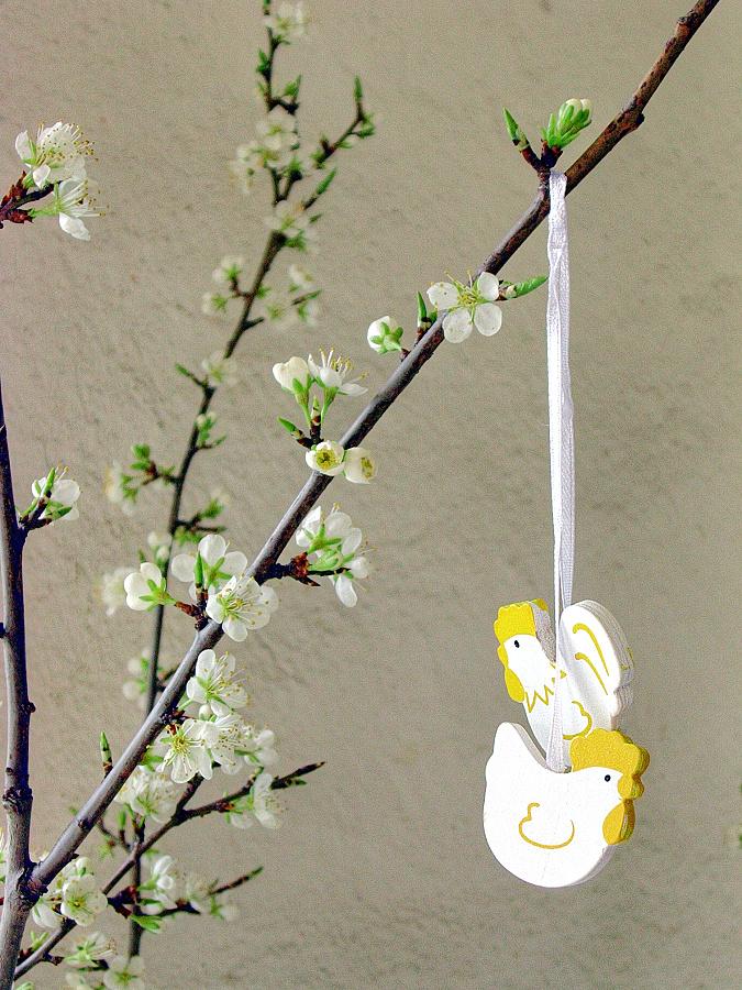 Kvetoucí větvičky ze zahrádky